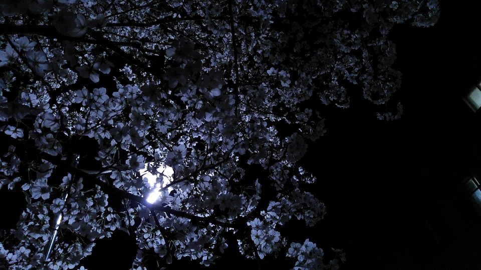The Full Flower Moon – 18th May 2019 - Psychic Today Blog